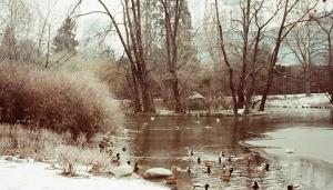 Stadtpark (with ducks on holiday)
