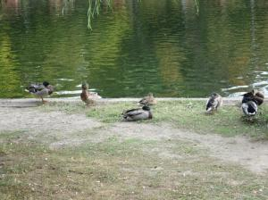 Duck Holiday and friends take a break